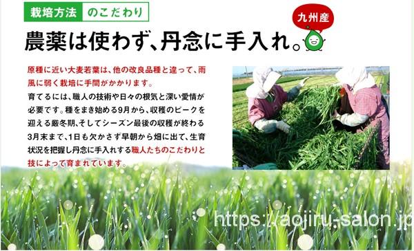 農薬を使わず安全な大麦若葉