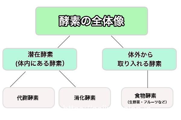 酵素の種類や役割